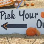 Mason Monday: Pumpkin Patch Edition