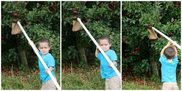 Mason Apple Picking Collage 1