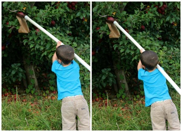 Mason Apple Picking Collage 2