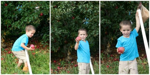 Mason Apple Picking Collage 3