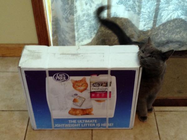 Hazel Loves Cat's Pride