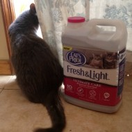 Cat's Pride Fresh & Light Ultimate Care™ Container #Giveaway