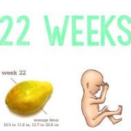22 weeks collage