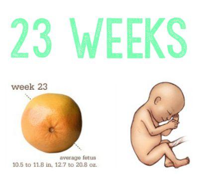 23 Weeks Collage