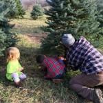 O Christmas Tree + #Giveaway