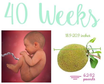 40 weeks collage
