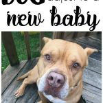 5 Tips for Welcoming a New Baby Home with a Dog + Beneful Giveaway