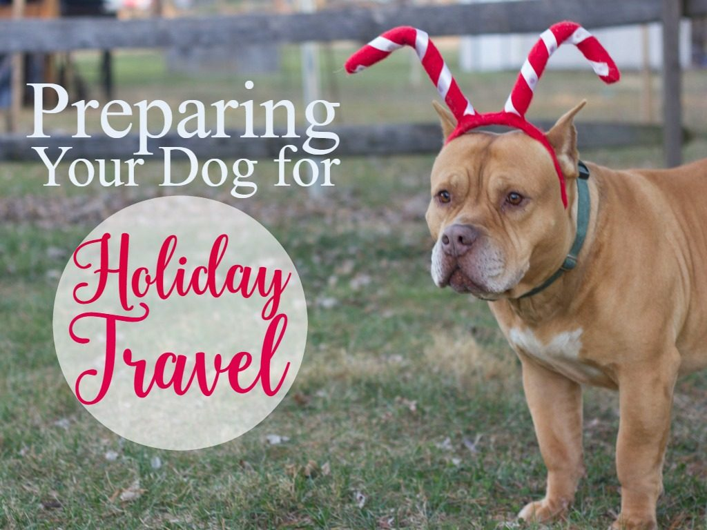 preparing-your-dog-for-holiday-travel