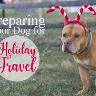 Preparing Your Dog for Holiday Travel + Year of Beneful Dog Food Giveaway